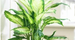 Красивые домашние растения, которые прекрасно растут при низкой освещенности