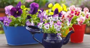 Как устроить сад на балконе и дома