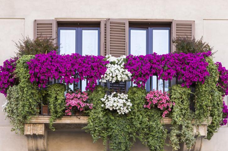 Вьющиеся цветы на балкон